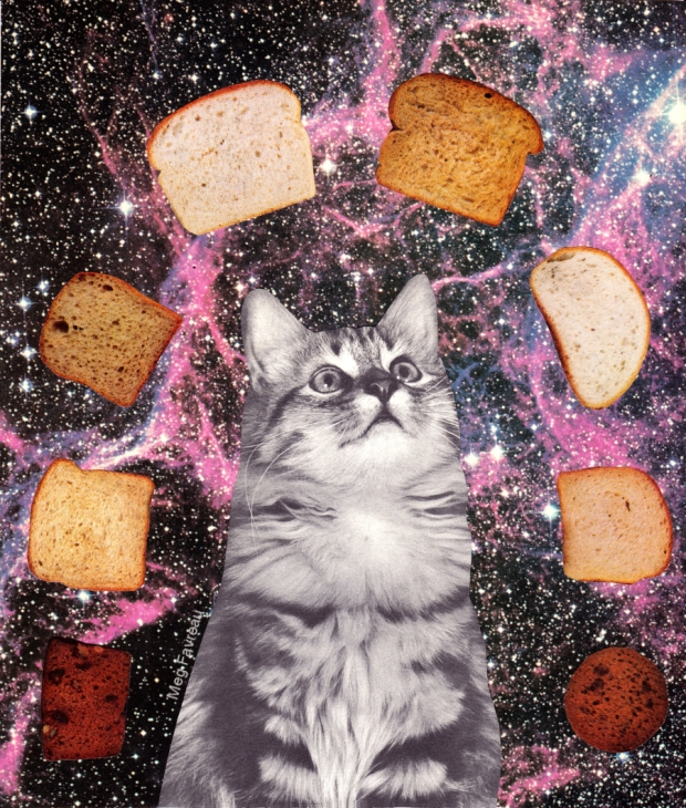 bread_space_cat_contrast_websoc